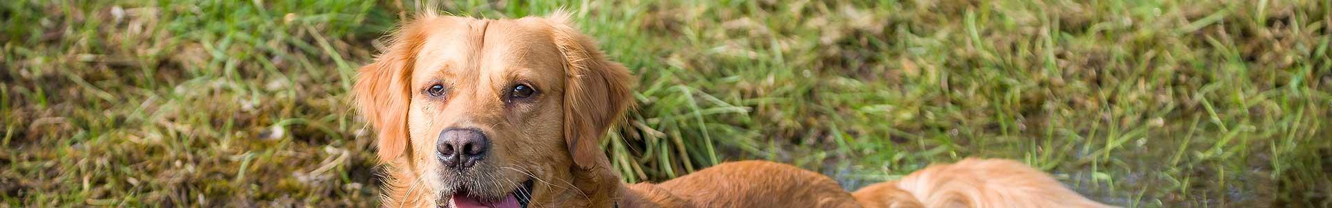 Bianka´s goldige Hunde